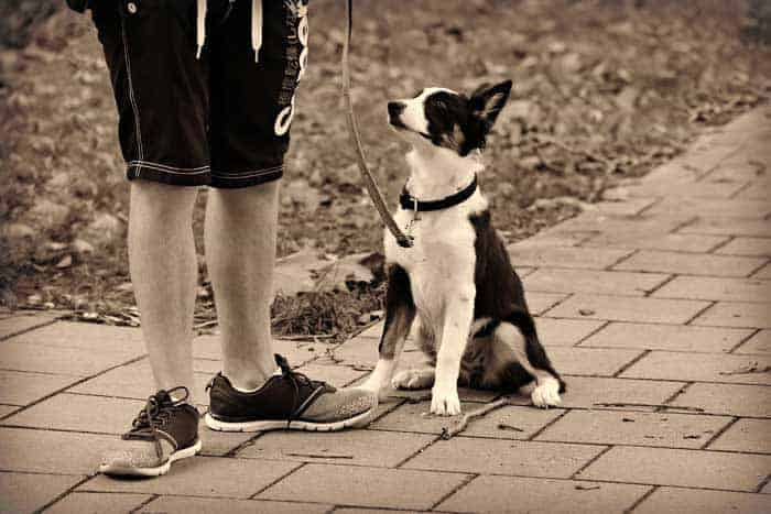 How do I get my dog to stop barking at other dogs when out walking?