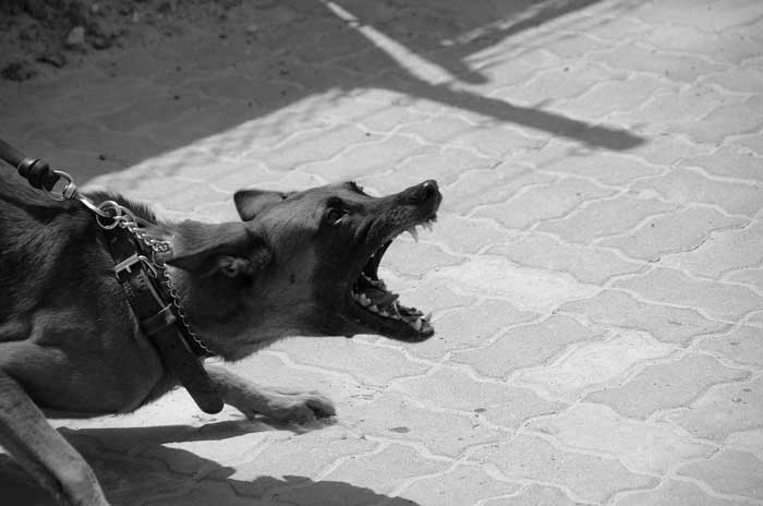 How to stop dog barking when out walking