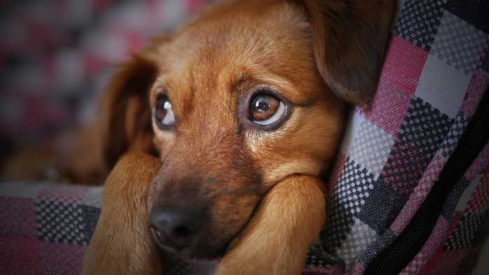 Learning what the anxiety looks like in your dog