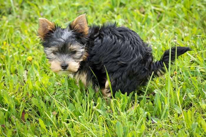 Dog grass pads for apartments