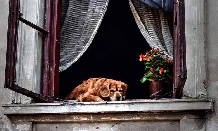 How to Help a Dog with Separation Anxiety • CityDogsLife