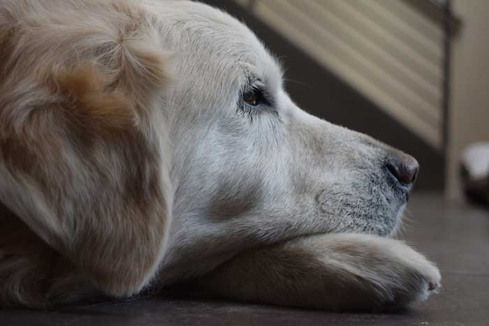 how to make an old dog comfortable and happy