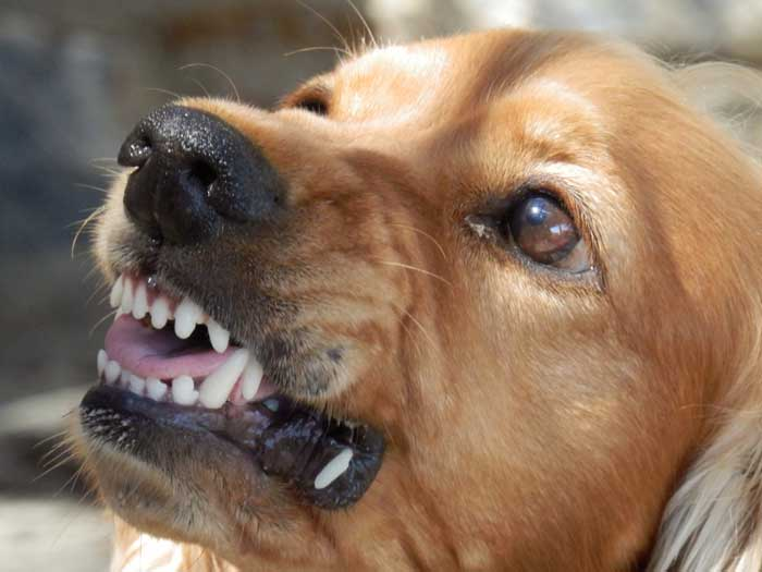 How Can You Prevent Aggression in your Dog?