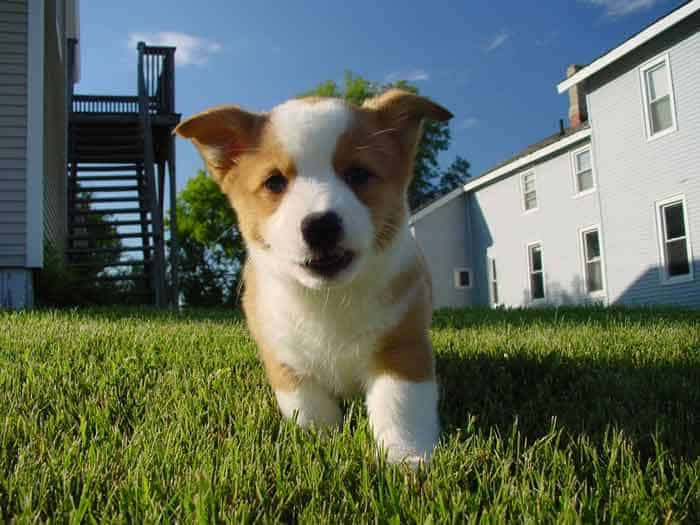 Prepare your puppy for apartment potty training