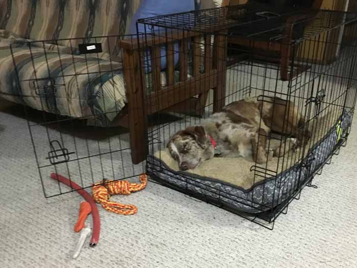 Where to put dog crate in house