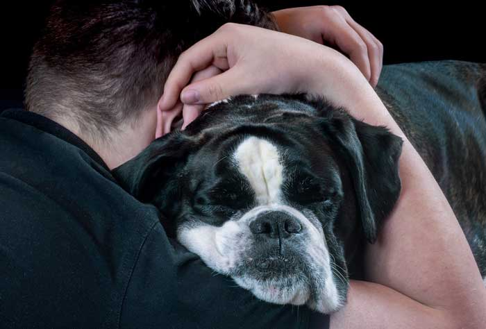 Why Do Dogs Like to Cuddle?